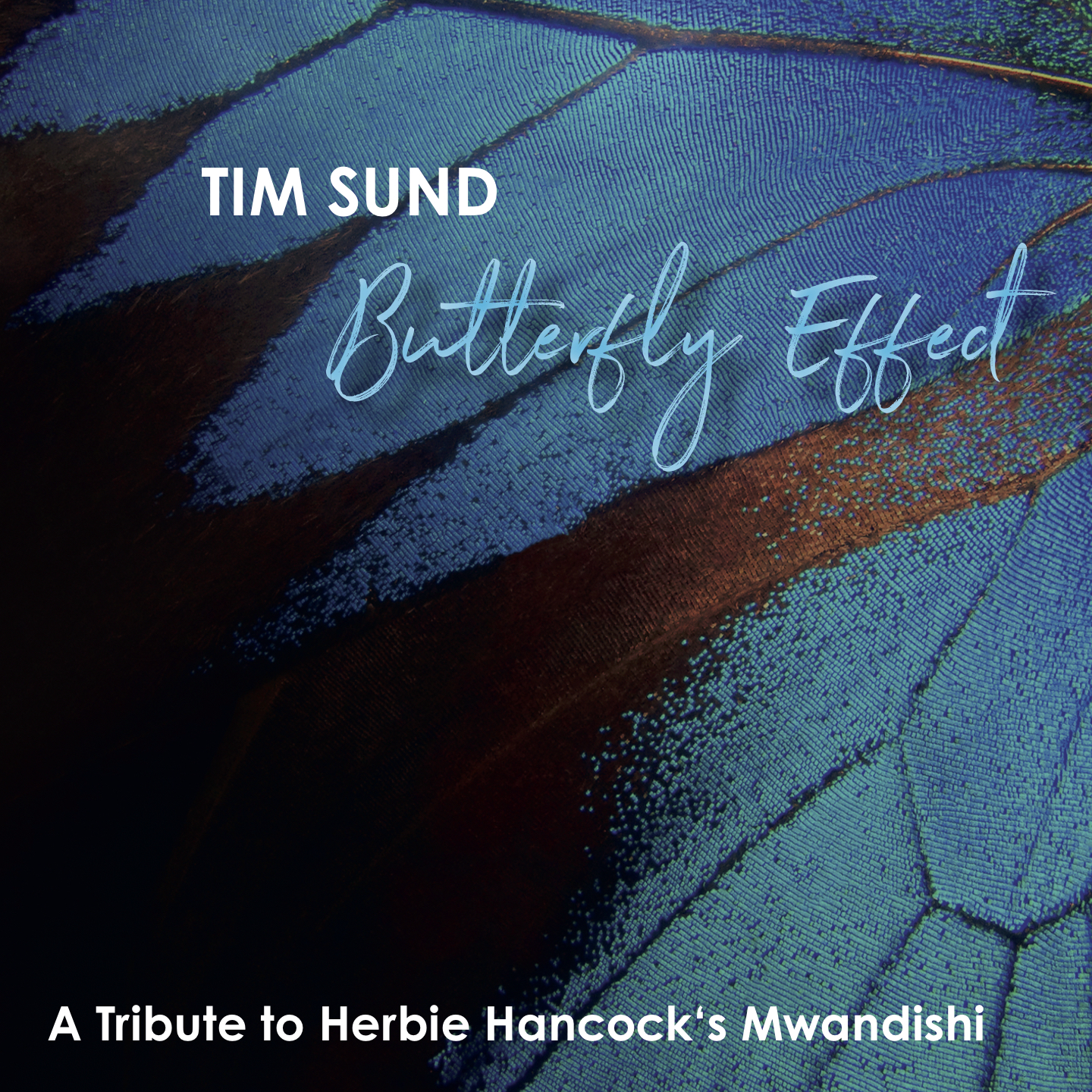 Tim Sund Butterfly Effect Cover © Laika Records 2019